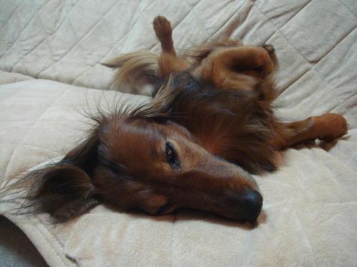 すごく眠くて、動けない・・・