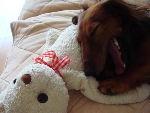 クマさんを枕に、大あくび